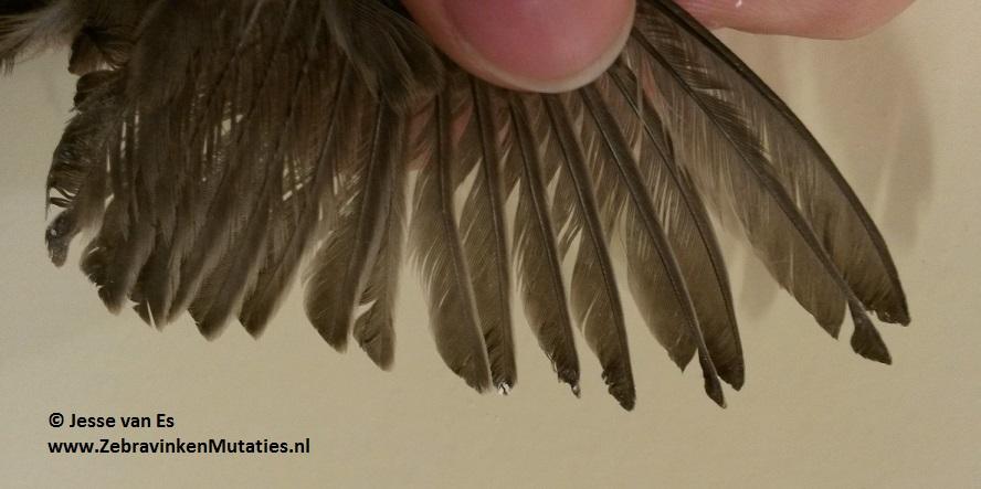 eumo-vleugel